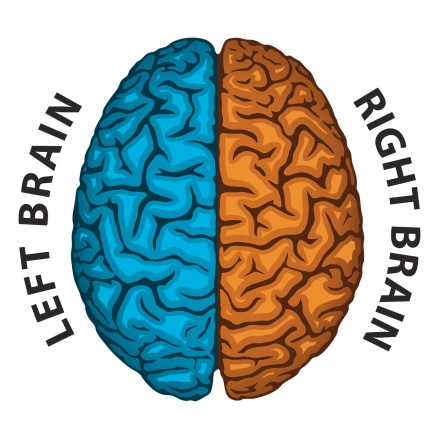 Left Brain, Right Brain. Human brain hemispheres.